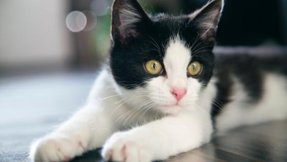 een heel lieve kat of een hele lieve kat